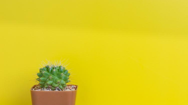 Adult Summer Reading Event: Mini Succulent Garden Craft